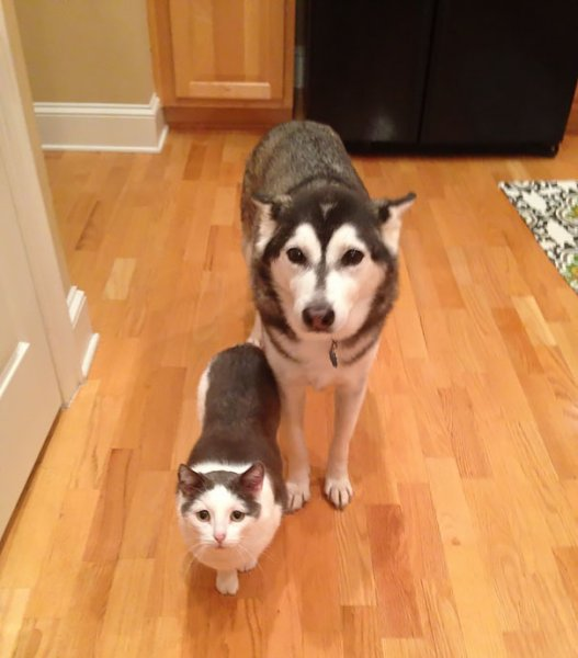 Brother-from-another-mother-similar-animals-13-578629b08610e__605