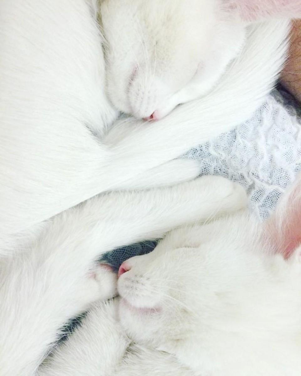 Ele sunt cele mai frumoase pisici gemene din lume!